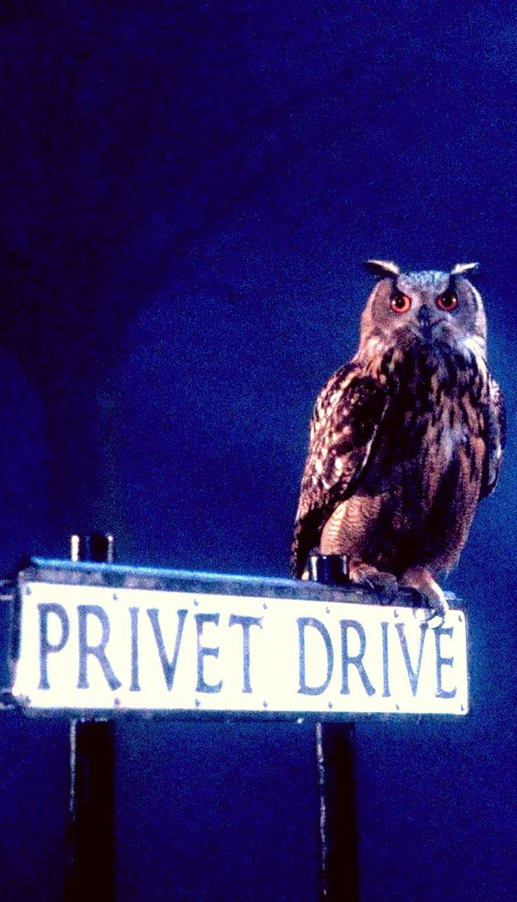 Privet Drive - Harry Potter Photo (38912571) - Fanpop