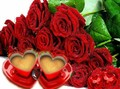Roses - love photo