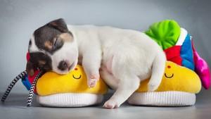 Sleeping tuta