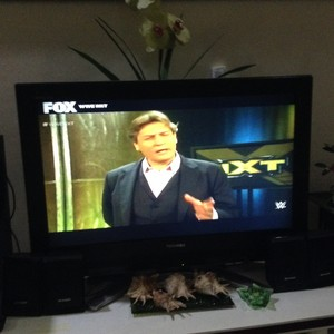 William Regal in NXT TakeOver: Brooklyn Pre-Matches