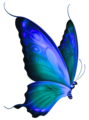 blue papillon clipart 4TbKyn7jc