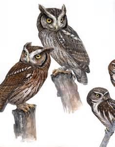 owl trinity