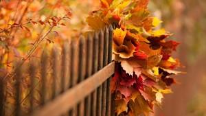 the Gorgeous Autumn