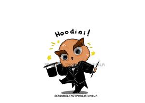 Adorable Hoodini