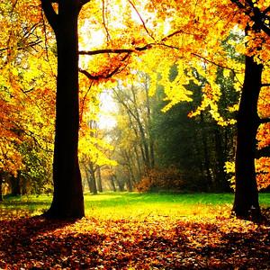 Autumn 粉丝 Art