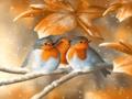 Birds - animals photo