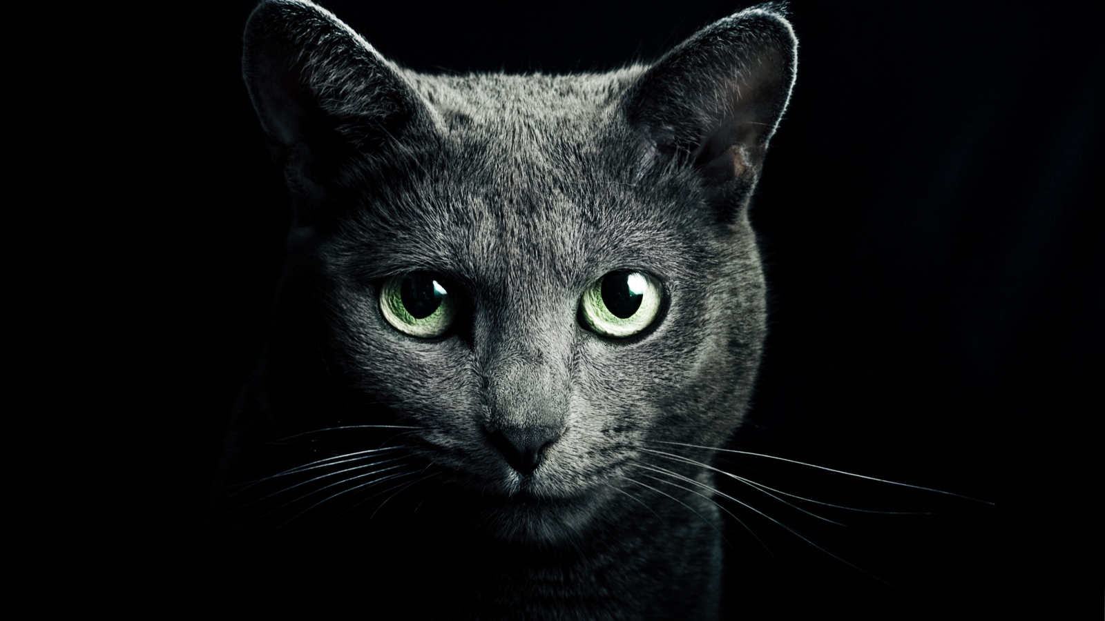 Black Cat Animals Wallpaper (39057462) Fanpop