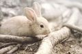 Bunny - animals photo