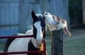 Cat and Horse  - animals photo