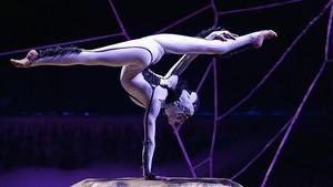 Cirque du soleil ovo contortionist act