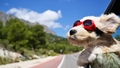 Cool Dog - dogs wallpaper