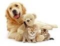 Dog and Kittens  - animals photo