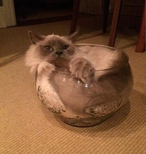Flexible 고양이