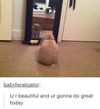 Fluffy Rabbit - bunny-rabbits photo