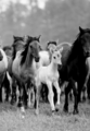 Horses  - animals photo