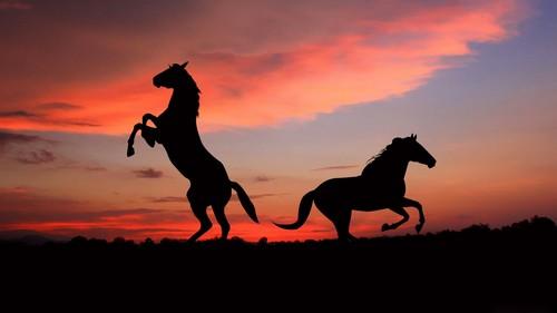 Kuda kertas dinding titled Kuda