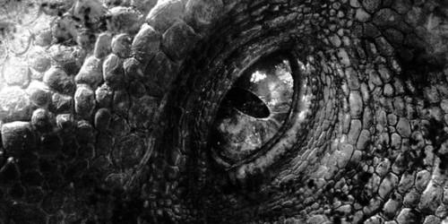 Jurassic World پیپر وال called Indominus Rex