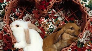 Любовь Bunnies