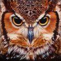 Owl  - animals photo
