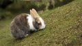 Pretty Bunny - bunny-rabbits wallpaper