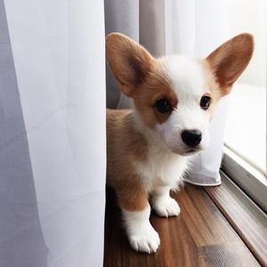 perrito, cachorro
