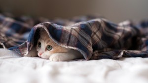 Shy Kitten