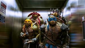 Turtles in an Elevator
