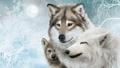 Wolfs  - animals photo