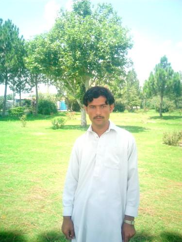 Shahid Afridi karatasi la kupamba ukuta with a live oak entitled asim tanha