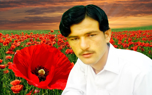 Shahid Afridi wolpeyper containing a bouquet and an oriental amapola titled parachinar asim tanha