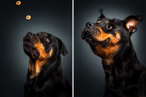 Dog Catching a Treat
