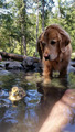 Dog and Duckling - dogs photo