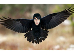 Noel Raven