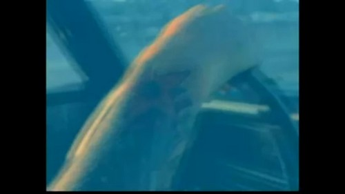 David Guetta wallpaper possibly containing a pacific sardine called Stay {Music Video}