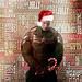 Steve Rogers - chris-evans icon