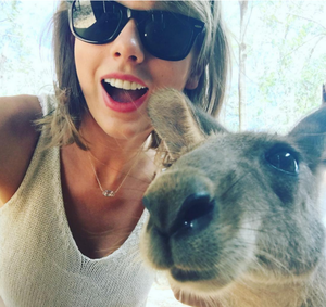 Taylor and 캥거루