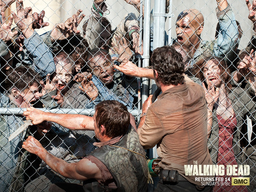 The Walking dead wallpaper with a chainlink fence titled The Walking Dead