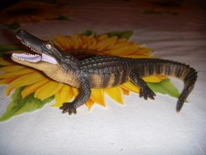 Alligatore Safari Ltd.