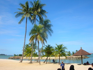 সৈকত palm trees