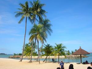 tabing-dagat palm trees