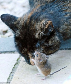 Cat and topo, mouse