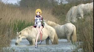 シャルロット, シャーロット Dunois with an beautiful herd of wild camargue 馬