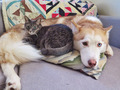 Dog and Cat - dogs photo