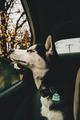 Dpg - dogs photo