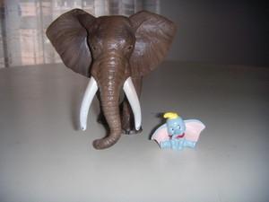Dumbo e l'elefante africano.JPG