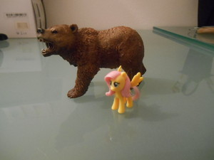 Fluttershy e l'orso grizzly