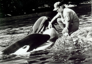 Free Willy 2 ❤