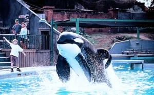 Free Willy ❤