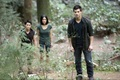 Jacob  - taylor-lautner photo