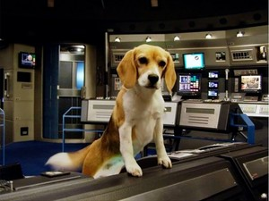 Porthos: (Captain Jonathan Archer's dog)